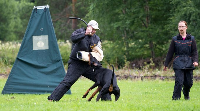 Grand Dobermann Weekend 28.-30.7.2017 Kouvolassa